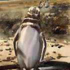 Painting of Magellanic penguin (with attitude)