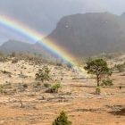 Pot-of-gold-buried-under-tree